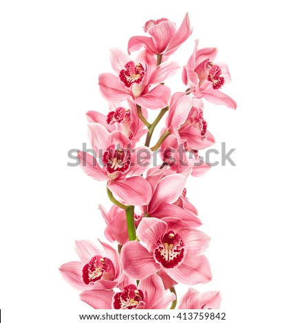 Orchid flowers isolated on white background - stock photo