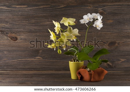 Orchid in clay pot over a wooden background.