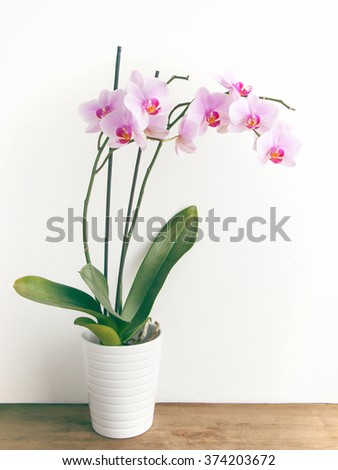 Orchid in pot - stock photo