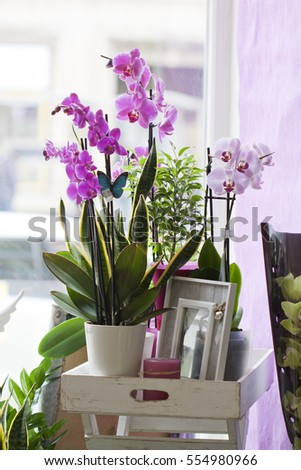 Orchid in pot in flower shop or market Orchid decoration tropical plants