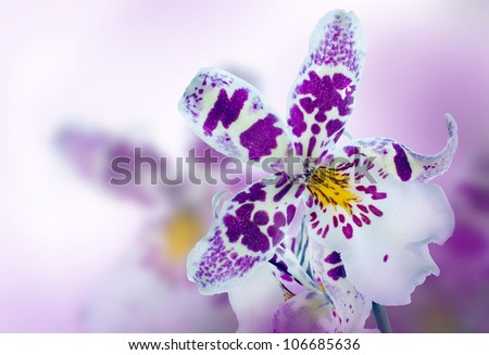 Orchid in the diffuse background of lilac - stock photo