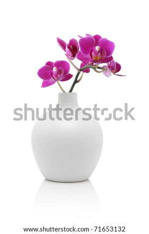 Orchid in white vase, isolated on white - stock photo