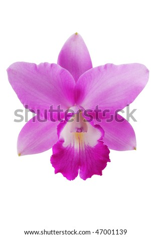 orchid isolated white,see more orchid in my portfolio - stock photo