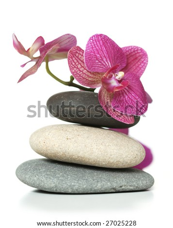 Orchid laying on stones - stock photo