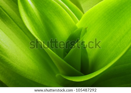 orchid leaves background - stock photo