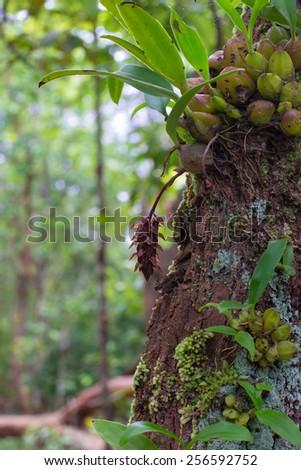 orchid on bark tree - stock photo