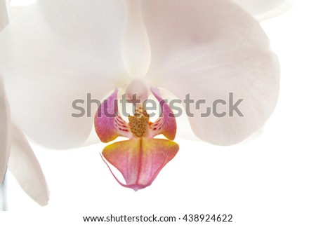 Orchid, Orchid Close up, White Orchid, Flower, Flowers, Flower Close up, Macro, Nature, Bloom, Abstract Pink, White, Yellow, Green, - stock photo