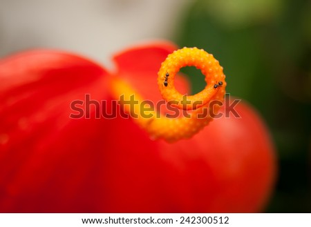 orchid petal of flower close up in bloosom - stock photo