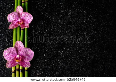 orchid, phalaenopsis, purple, white background, isolated, flower, plant,pink