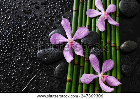 orchid with black stones on bamboo grove on wet background - stock photo