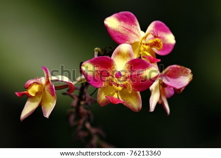 Orchidee Orchid - stock photo