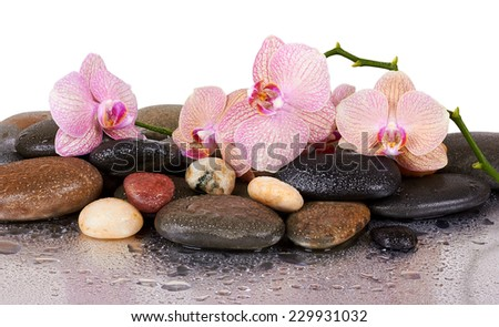 orchids and wet black stones with reflection - stock photo