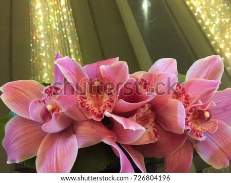 Orchids close up and light, style, design, modern