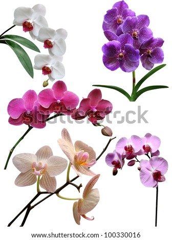 Orchids flowers it is isolated - stock photo