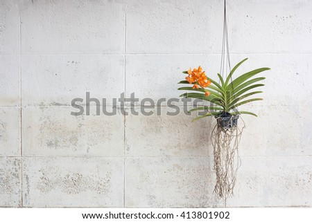 Orchids grown in plastic pots hanging on the walls. - stock photo