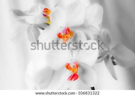 Orchids isolated against white