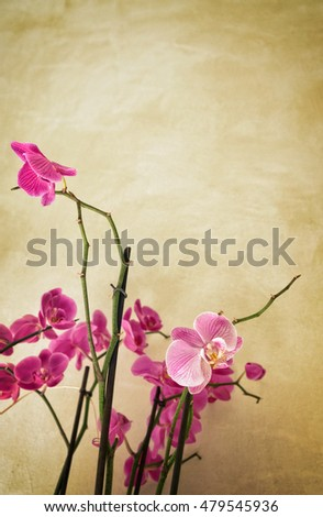 Orchids on vintage background with copy space