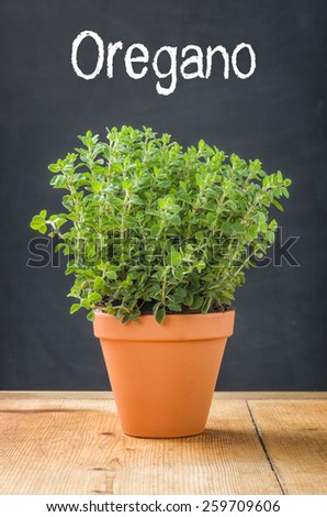 Oregano in a clay pot on a dark background - stock photo