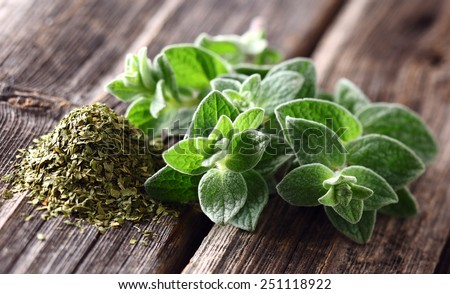 Oregano spices - stock photo