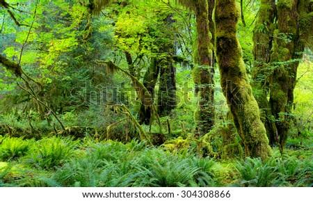 Oregon Forest. - stock photo