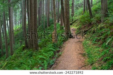 Oregon's Lush Coastal Rainforest on the Cape Falcon Trail - stock photo