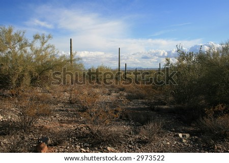 Organ Pipe National Park, (near campground), on the Sonoran Desert in Arizona (with Saguaro cacti) - stock photo