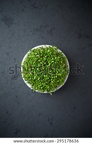 Organic alfalfa sprouts  - stock photo