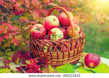 Organic apples in the basket on green grass - stock photo