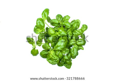 Organic basil plant in the basket & tomatoes - stock photo