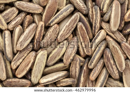Organic dry Gulmohar (Delonix regia) seeds. Macro close up background texture. Top view.
