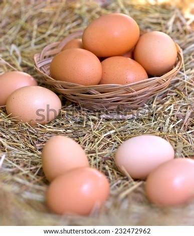 Organic eggs - stock photo