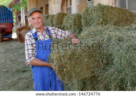 Organic farmer stack bales for feeding livestock. Model is a real farm worker! - stock photo