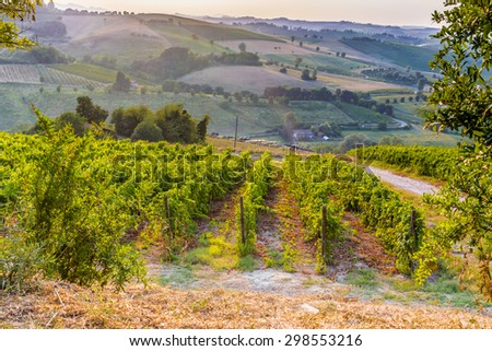 Organic farming in hill - lush vineyards and farmland in the quiet hilly countryside