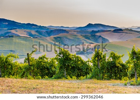 Organic farming in hill - lush vineyards and farmland in the quiet hilly countryside - stock photo