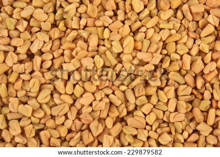 Organic fenugreek seeds . - stock photo