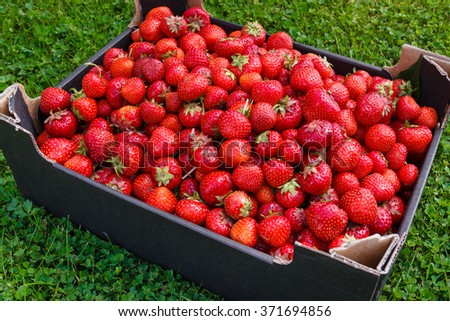 Organic fresh strawberries in a box on the grass - stock photo