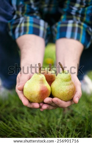 Organic fruit. Healthy food. Fresh pear in farmers hands - stock photo