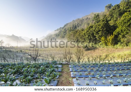Organic garden surrounded by mountain - stock photo