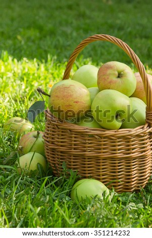 Organic green apples in a wicker basket on the green grass in sunny summer day, vertical image - stock photo