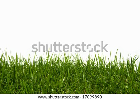 Organic Green Grass Isolated on White - stock photo
