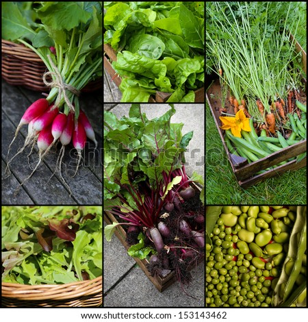 Organic grown vegetable freshly picked from garden set collage collection black frame