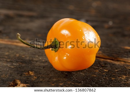 Organic Hot and Spicy Habanero Peppers against a background