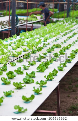 Organic hydroponics vegetable garden. - stock photo