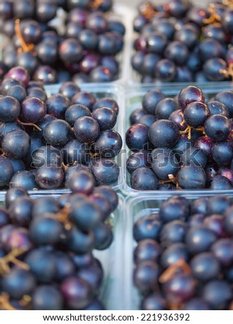 Organic Muscadine Grapes (Vitis rotundifolia) for sale - stock photo
