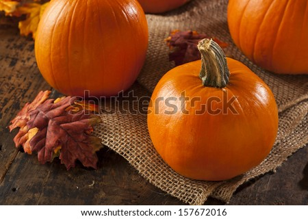 Organic Orange Fall Pie Pumpkins for Halloween  - stock photo