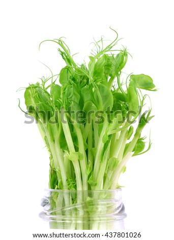 organic pea sprouts isolated on white background - stock photo