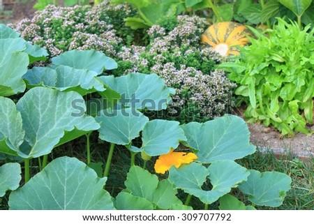 Organic permaculture  garden - stock photo