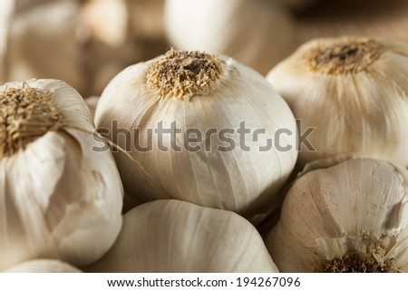 Organic Raw White Garlic on a Background
