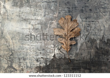 Organic still life photograph of natural objects on textured grey background.