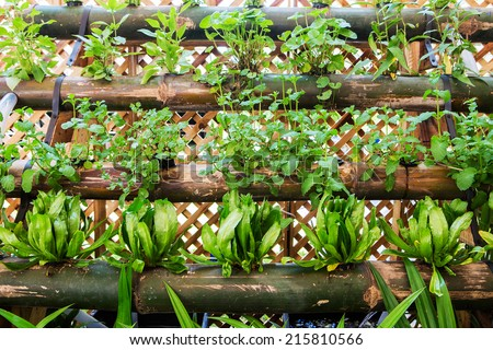 Organic vegetable garden. - stock photo